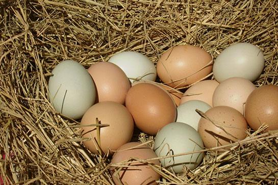 yöntem rafadan yumurta ve kayısı kıvamında yapılan yumurtadır. ile ilgili görsel sonucu